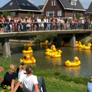 Duckrace Zaltbommel